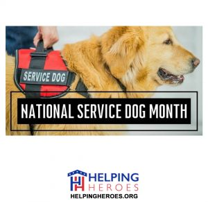 Read more about the article National Service Dog Month
